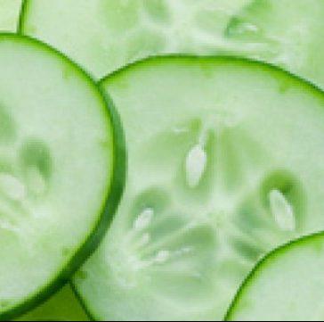 komkommerschaaknieuws